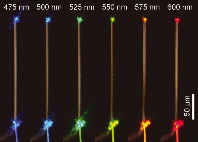 La fibre de glace (ici un morceau de quatre micromètres de diamètre et 200 micromètres de long) transmet parfaitement la lumière à toutes les longueurs d'onde. © Peizhen Xu et al, Science, 2021