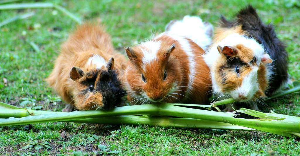 Hamsters. © Violetta, Pixabay, DP