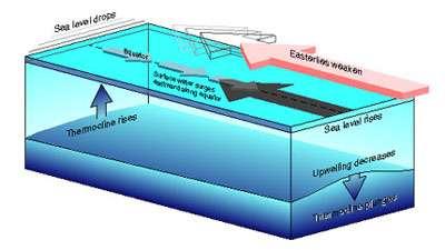 Figure 9 Les alizés (flèche rouge) qui s'étendent habituellement sur tout le Pacifique équatorial régressent vers l'est lors du déclenchement de conditions El Niño. Ceci déclenche des changements dans la couche supérieure de l'océan. Le long de l'équateur, la pente de la surface et la pente de la thermocline s'aplatissent toutes les deux.