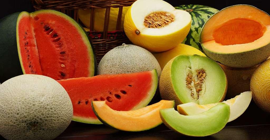 Une pastèque (aussi appelée melon d'eau) ainsi que différentes variétés de melons. © Siegi, Shutterstock