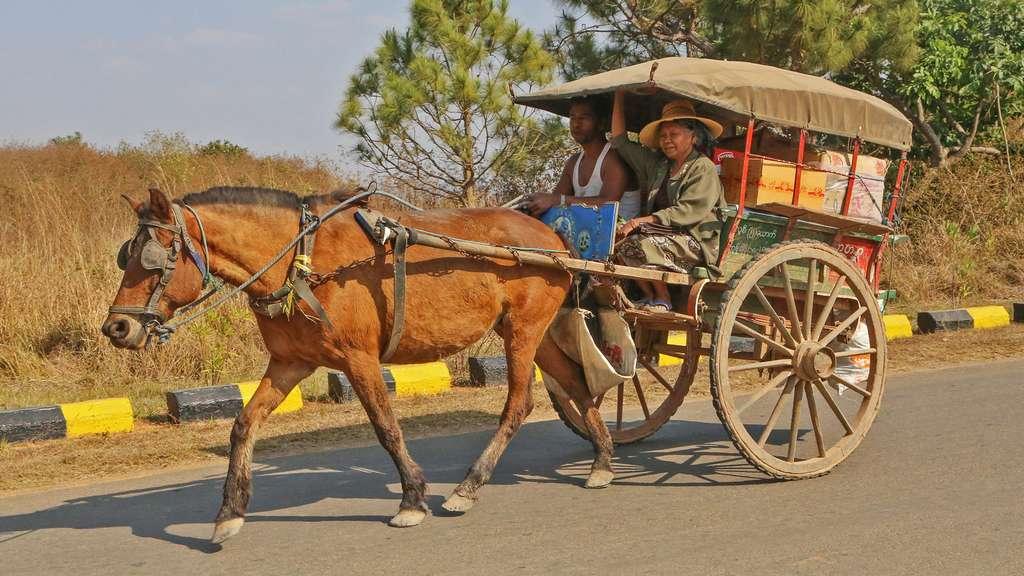 Calèche traditionnelle birmane sur la route de He Hoe