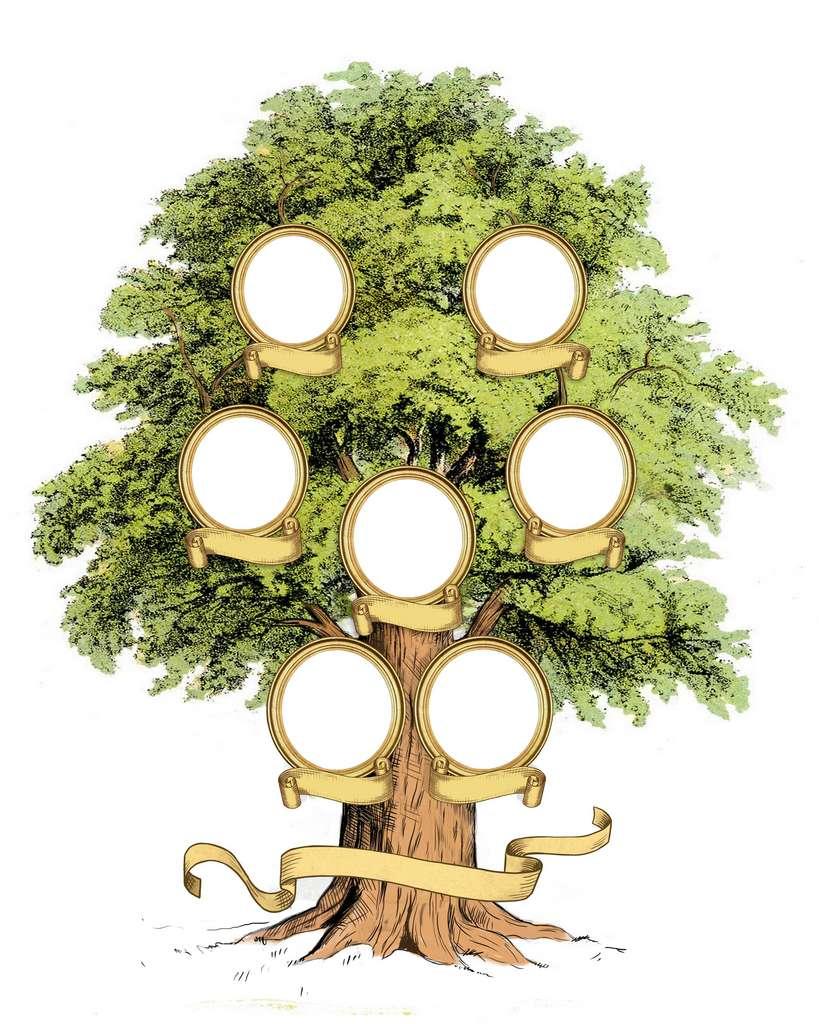 Les chercheurs ont mis en évidence deux ensembles de quatre lignées divergentes au sein de l'arbre généalogique humain. Les premières quatre branches se situent entre 250.000 et 200.000 ans, tandis que les quatre autres ont divergé vers 80.000-60.000 ans. Cette seconde période de divergence a conduit aux humains non-africains. © Ivan, Adobe Stock