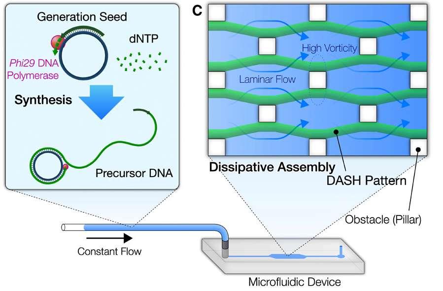 Le fonctionnement du système Dash : les molécules d'ADN sont injectées dans un microfluide où s'assemblent et dégénèrent les brins d'ADN. Cette dynamique leur permet également d'évoluer dans le microfluide au travers d'obstacles. © Shogo Hamada et al, Science Robotics, 2019
