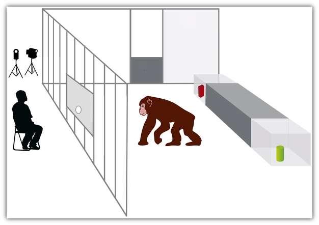 Dispositif de l'expérience : derrière le chimpanzé ou le chien, deux objets séparés. L'humain derrière la vitre pointe du doigt l'un des objets. Qui du chien ou du chimpanzé sait rapporter le bon ? © Kirchhofer et al. 2012, Plos One