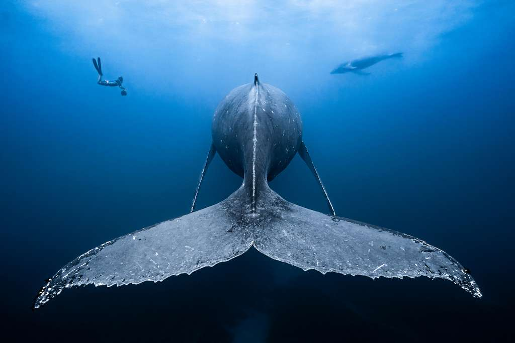 « Gentil géant ». © François Baelen, Ocean Art Competition 2018
