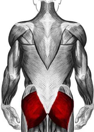 Anatomie : grand fessier. © DR