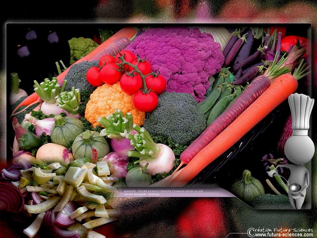 Panier de légumes, carotte, chou, courgette