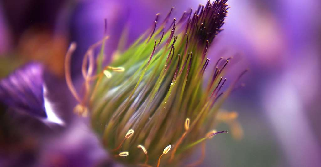 Bourgeon un élément essentiel de la plante. © Lucky2013, CCO
