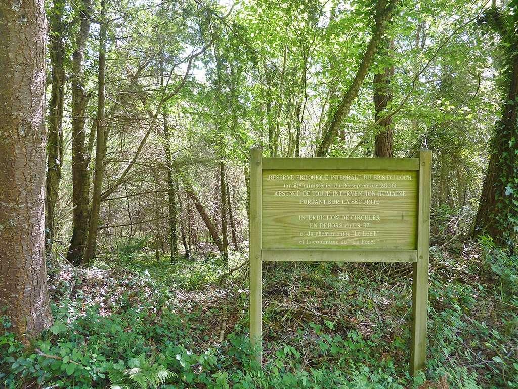 La réserve biologique intégrale du Bois du Loc'h © Henri Moreau, Wikipedia