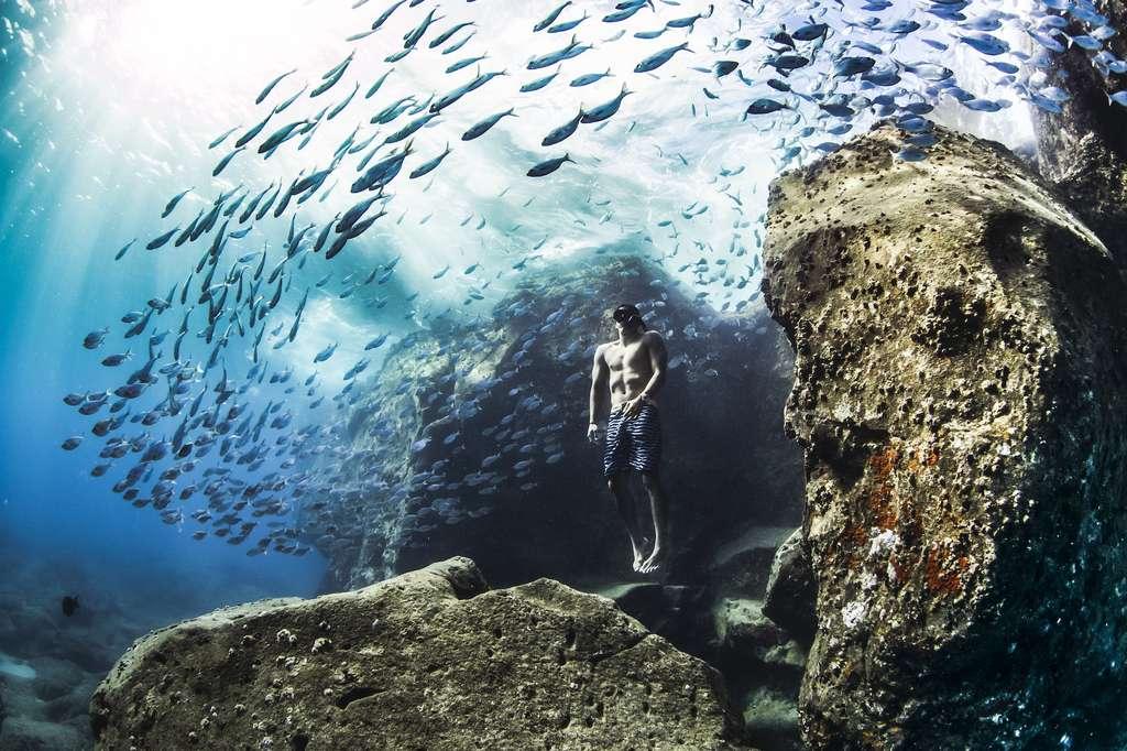 Plongée à Hawaï. © Christa Funk, World Nature Photography Awards