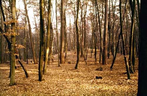 Tumulus entre Hatten et Seltz. © Bernard Normand - Tous droits réservés, reproduction interdite