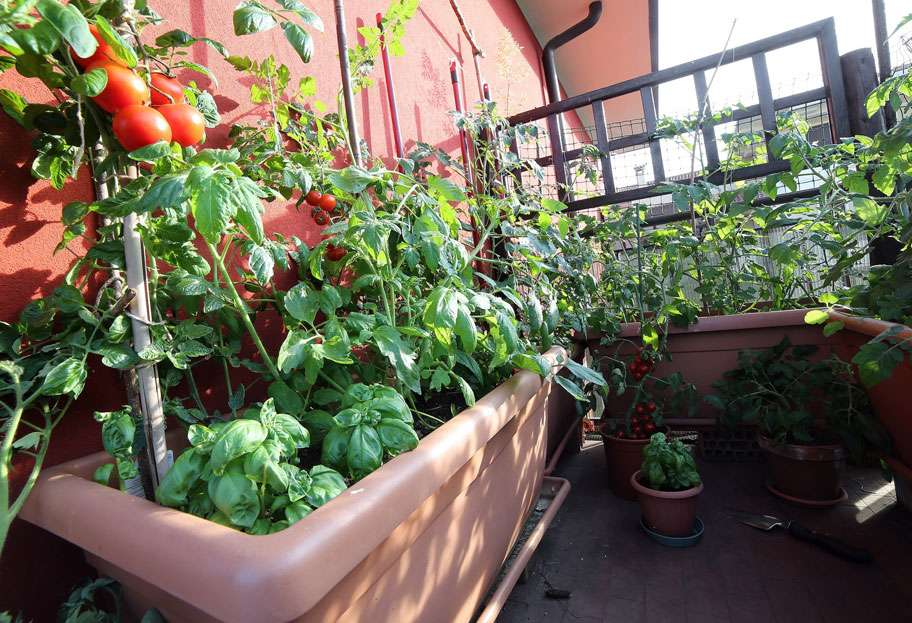 Tomates, basilic, salades... © ChiccoDodiFC, Fotolia