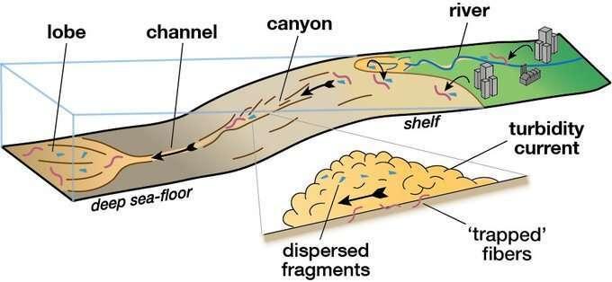 Un schéma expliquant le processus d'avalanche sous-marine et comment de grandes quantités de sédiments parviennent jusqu'aux profondeurs océaniques. © Université de Manchester