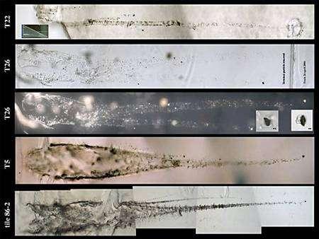Microphotographies de traces de pénétration de particules cométaires. © Nasa