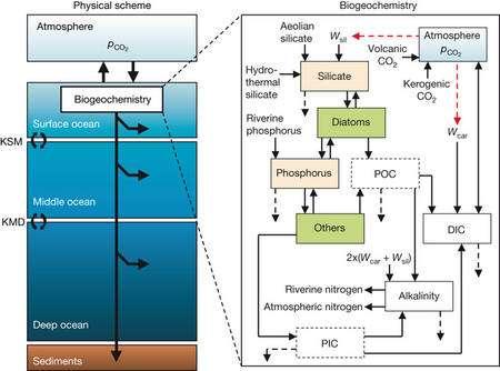 Le modèle biogéochimique de Tyrrell et ses collègues. Crédit : Nature