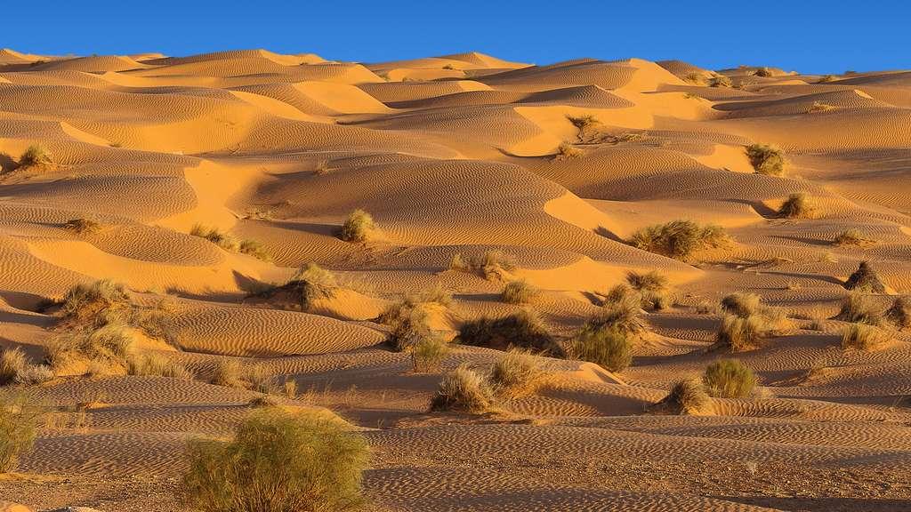 Tunisie, les dunes de Ksar Ghilane