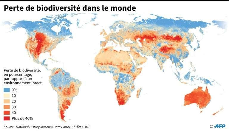 Perte de biodiversité dans le monde. © Simon Malfatto, AFP