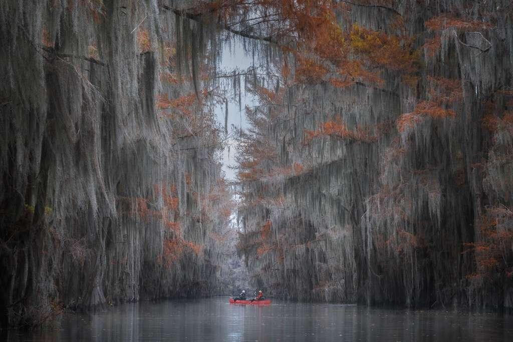Le Great Cypress Swamp et ses cyprès chauves