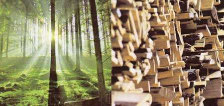 Bois nécessaire à la fabrication de la fibre de bois. © Pavatex