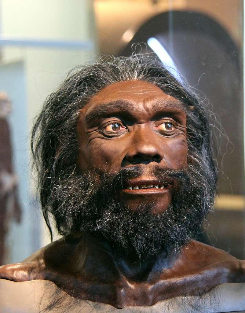 L'Homme de Denisova a-t-il fauté avec Homo heidelbergensis durant sa migration ? Ou était-ce avec une espèce encore inconnue des scientifiques ? © Tim Evanson, Flickr, cc by sa 2.0
