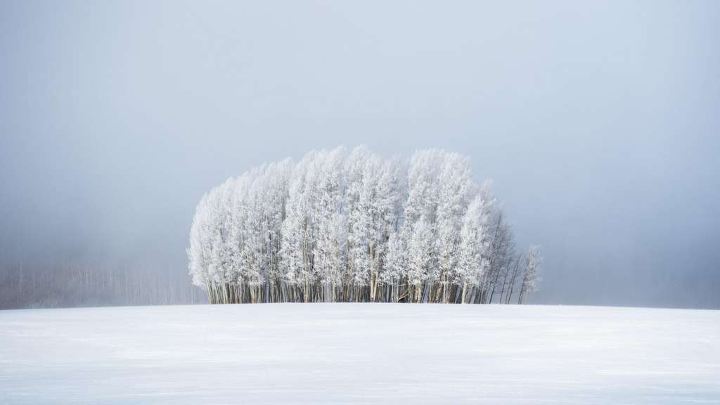 Arbres et brouillard. © Preston Stoll, Royal Meteorological Society