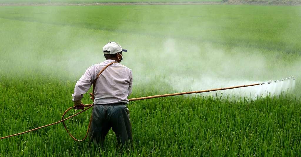 Les pesticides sont dangereux pour la santé. © Wuzefe - Domaine public