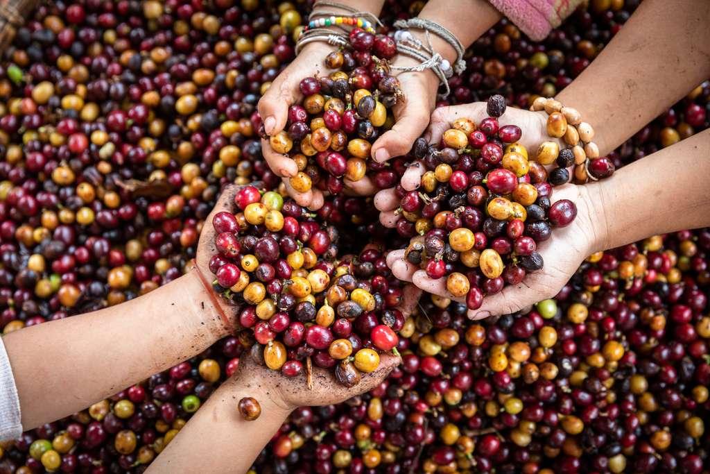 En cette période de confinement, l'agriculture a plus que jamais besoin d'aide. © Kamonrat, Adobe Stock