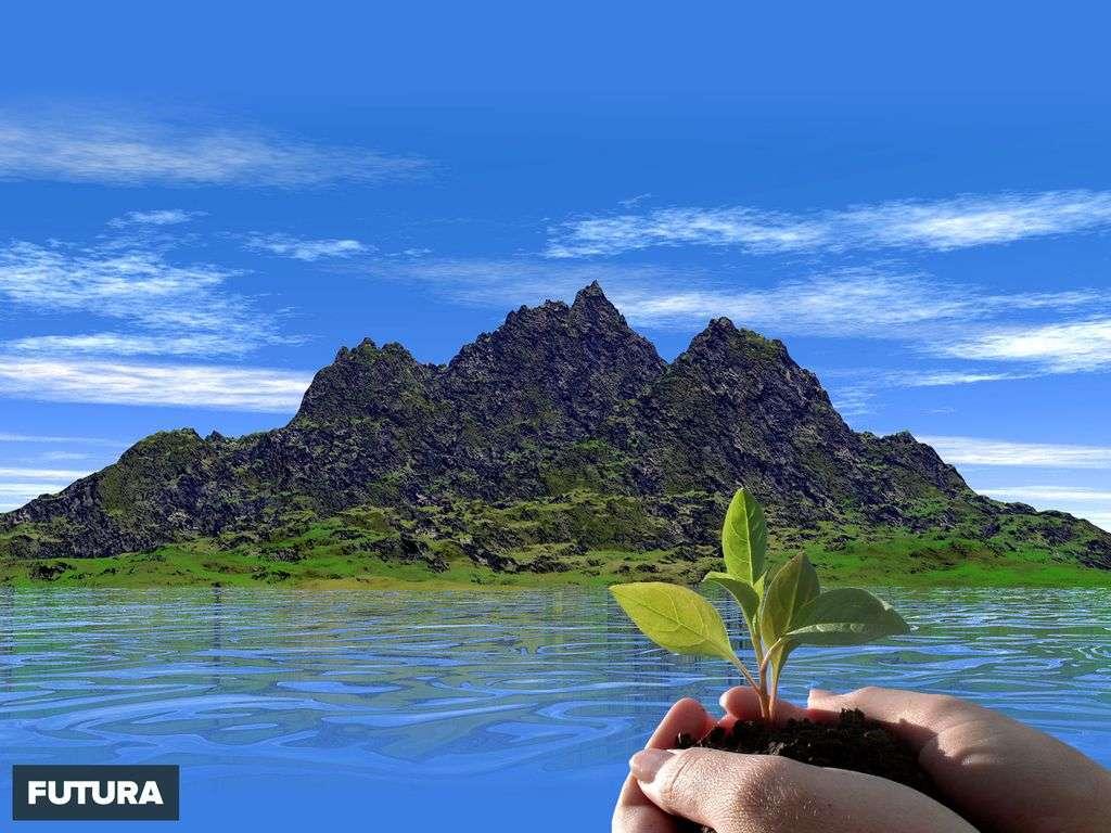 Plantons des arbres pour reboiser