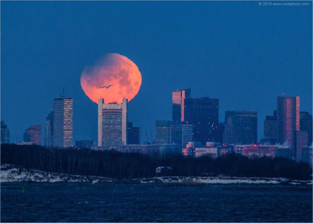 Pleine Lune rousse, ovale, comme aplatie et croquée sur un côté, prête à disparaître sous l'horizon. C'est l'éclipse de Lune vue de Boston. © Chris Cook, Spaceweather