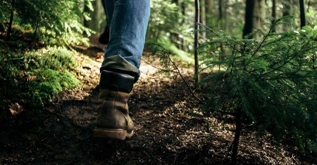 Lors des promenades en forêt, il est conseillé de rester sur les sentiers dégagés, de porter des pantalons longs, des chaussures fermées, voire de remonter ses chaussettes sur son pantalon. © Bogdan Sonjachnyj, Shutterstock