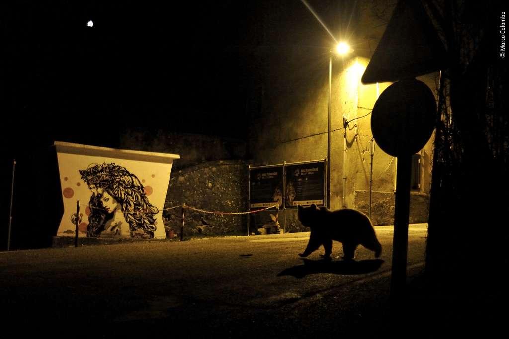 Cette photo de Marco Colombo a été distinguée par le premier prix dans la catégorie «Faune urbaine». © Marco Colombo