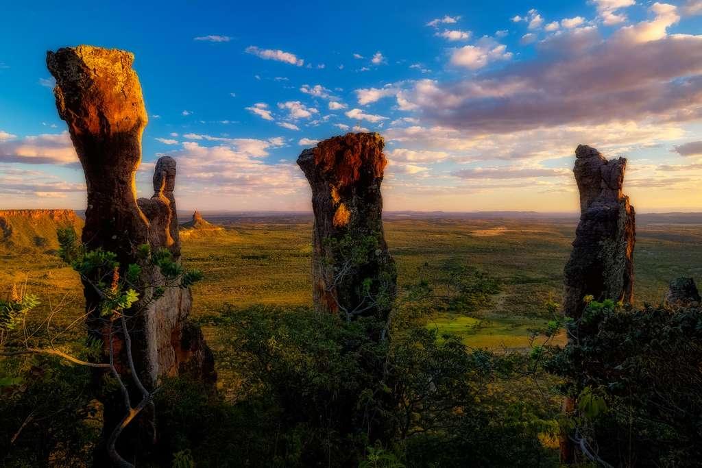 Sur les hauts plateaux du Cerrado
