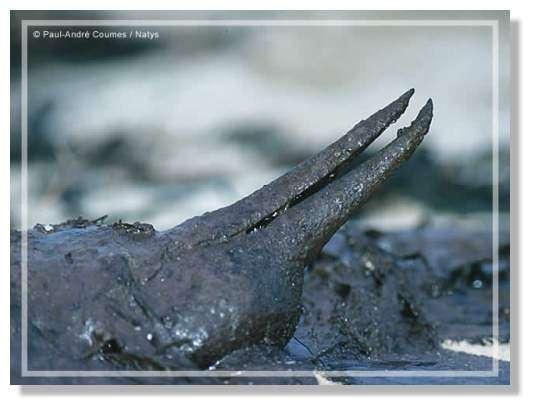 © Natys - LPO - Après la marée noire ......