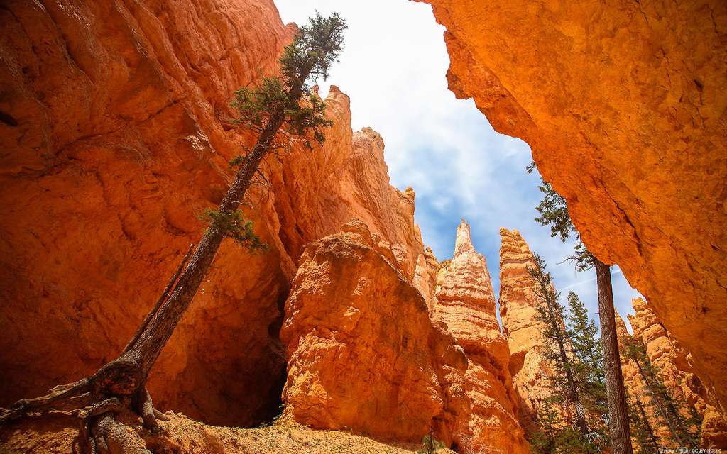 Le Bryce Canyon, dans l'Utah
