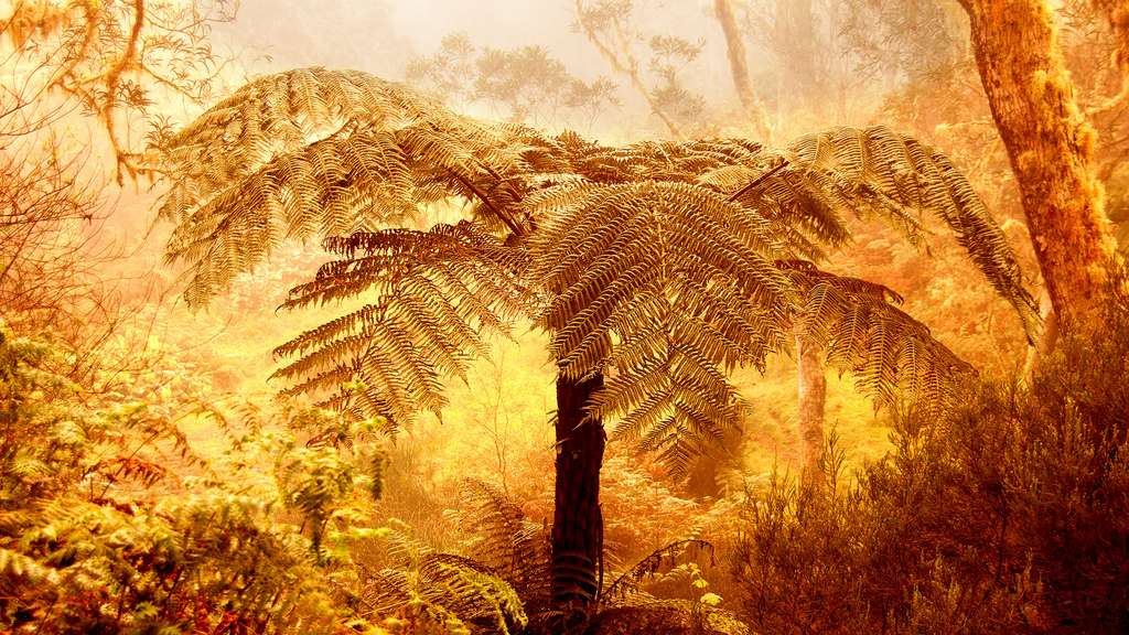 Le parc national de la Réunion : au cœur de la forêt sauvage