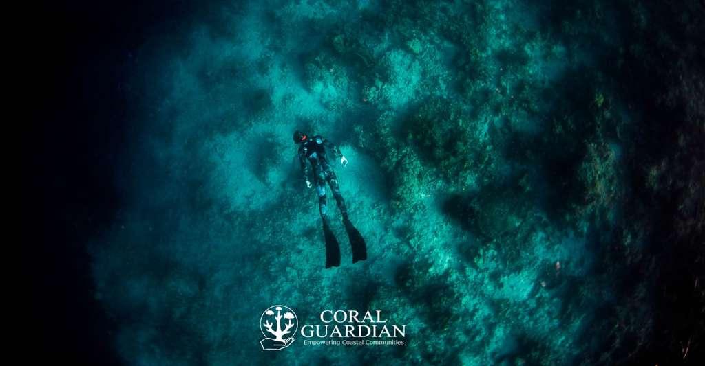 Adopter un corail, c'est possible ? Ici, repérage sur une zone détruite à la dynamite. © Coral Guardian, tous droits réservés