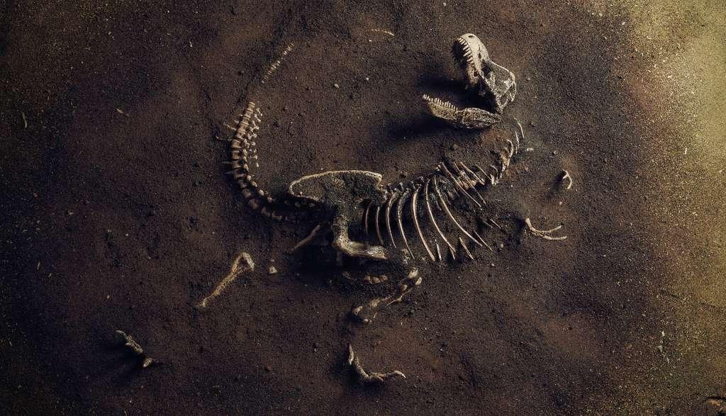 Les travaux des chercheurs de l'université de l'État de l'Oklahoma (États-Unis) montrent que la croissance des T-Rex n'était pas régulière et qu'elle pouvait être mise en sommeil pendant les périodes où la nourriture se faisait rare. Un avantage évolutif pour le roi des dinosaures. © trafa, Adobe Stock