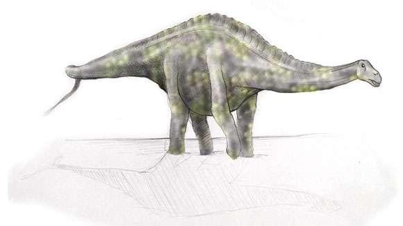 Reconstitution de Rebbachisaurus. © L. Cavin