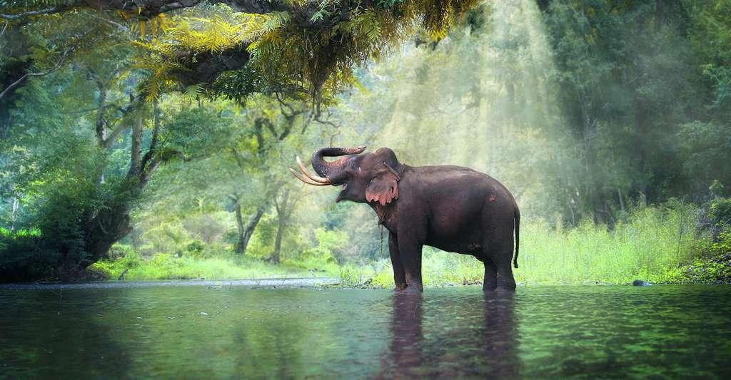 L'éléphant d'Asie se plaira-t-il dans l'écosystème arctique ? © goodze, Adobe Stock