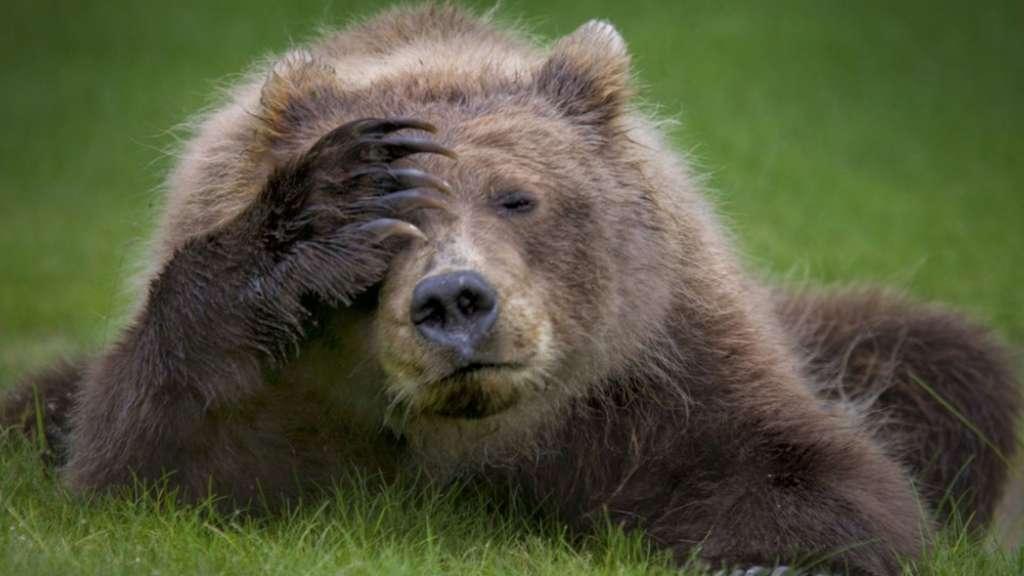 L'ours qui se prenait pour une marmotte