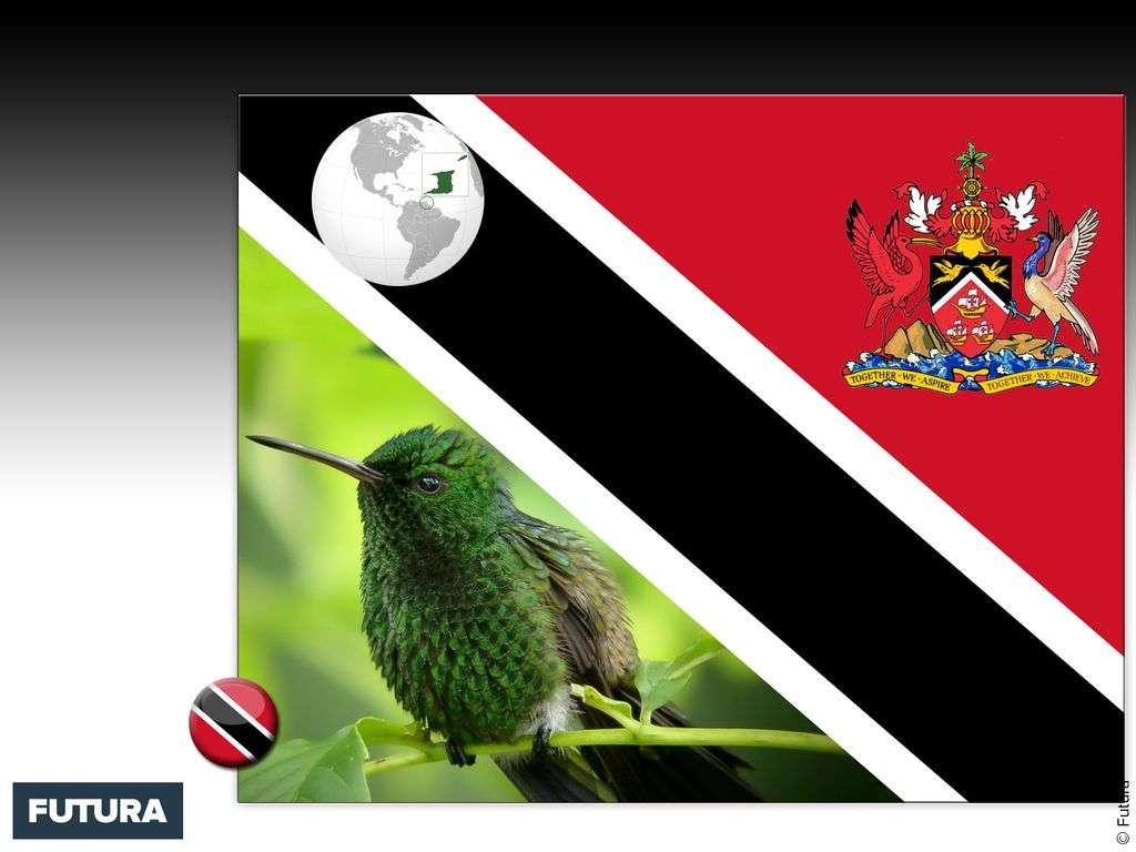 Drapeau : Trinité-et-Tobago