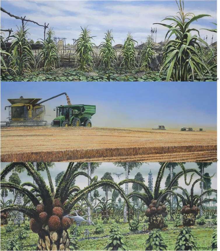 Ici, de haut en bas toujours, des villages et des bâtiments derrière une agriculture diversifiée basée sur le maïs dans le centre ouest des États-Unis – vers 1500. La même région aujourd'hui, transformée en monoculture céréalière avec de grosses machines pour les récolter. Et l'adaptation à un nouveau climat subtropical chaud et humide en 2500. Les chercheurs imaginent une agroforesterie subtropicale à base de palmiers à huile et de plantes grasses des zones arides ainsi que des cultures soignées par des drones guidés par une intelligence artificielle et une présence humaine réduite. © Lyon et al., 2021, CC by-ND
