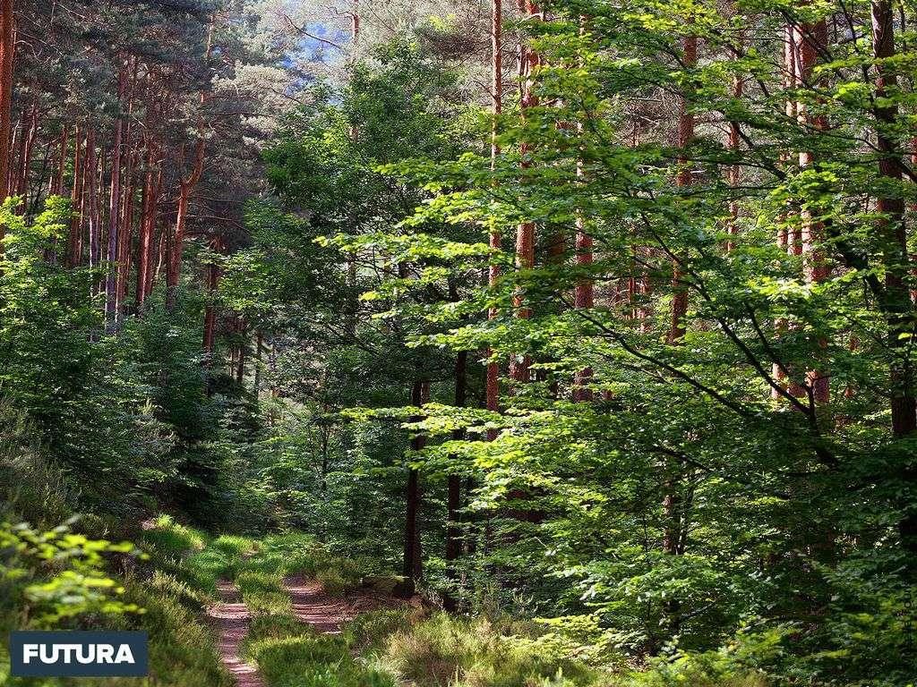 Forêt de Moselle