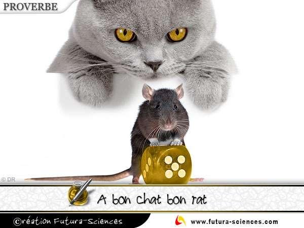 A bon chat bon rat