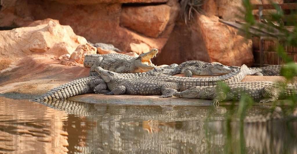 Ferme aux crocodiles. © Ferme aux crocodiles, CC BY-SA 3.0