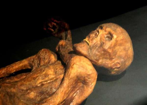 Cette momie est une reconstitution d'Ötzi, un homme mort il y a 4.500 ans et découvert congelé en 1991. Son état de conservation étant très bon, les scientifiques ont pu procéder à l'analyse de la matière fécale afin d'identifier les bactéries de sa flore intestinale. Celle-ci diffère assez nettement de celle des Occidentaux modernes. © Musée préhistorique de Quinson, 120, Wikipédia, cc by sa 3.0