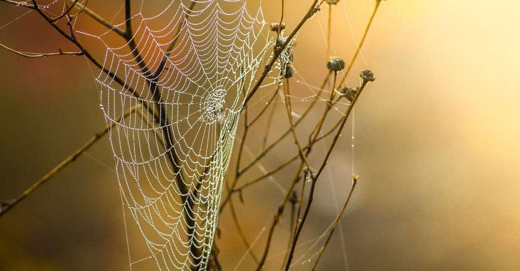 Les toiles d'araignées sont fascinantes. © Chuetz-mediendesign, DP