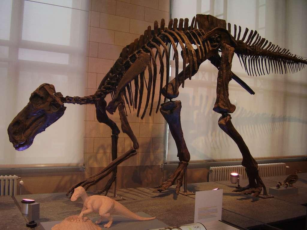 Un squelette de Maiasaura, dont des os ont séjourné dans l'espace en 1985. © Vladimír Socha