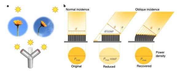 Grâce à sa tige orientable, le SunBOT se plie automatiquement vers la source lumineuse. De cette façon, la fleur récolte jusqu'à 400 % d'énergie en plus. © Xiaoshi Qian et al, Nature Nanotechnology, 2019.