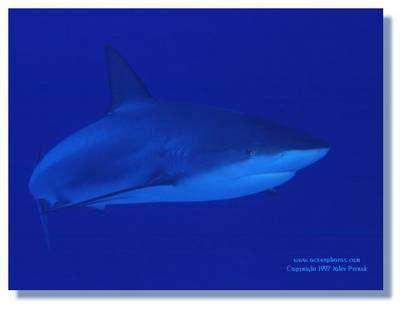 Le monde des requins. © DR